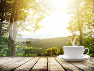 The Leftovers of a Morning Cup of Coffee Can Reinvigorate Forests